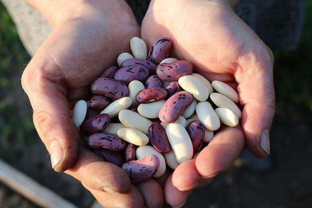 I legumi: l'importanza di introdurli nella dieta del bambino